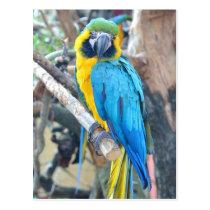 Parrot - Postcard