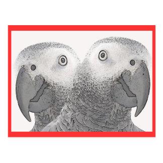 parrot postcard