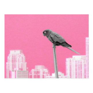 ~Parrot~ POSTCARD, CUSTOMIZE Postcard