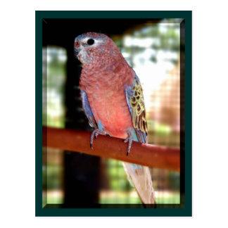 parrot postcards