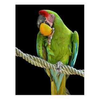 Parrot - postcards