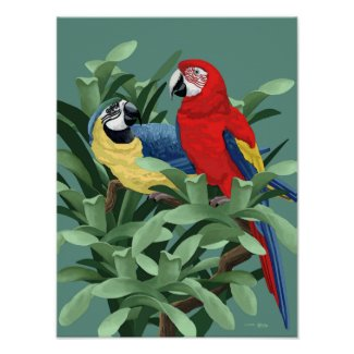 Parrot Posters and Art Prints