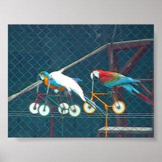 Parrot Race, Thailand Poster