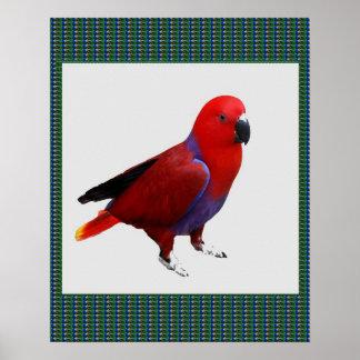 PARROT Red Pet Bird Poster