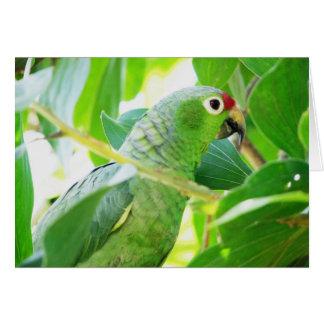 Parrot, Rio Chagres, Panama Greeting Card
