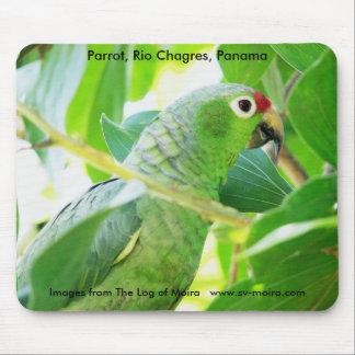 Parrot, Rio Chagres, Panama Mouse Pad