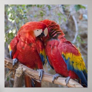 Parrot secret poster