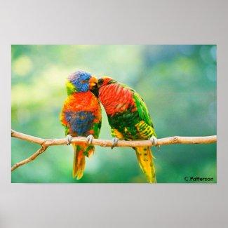 Parrot Secrets Poster