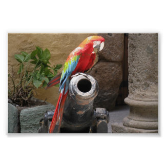 Parrot Sitting on Cannon Print