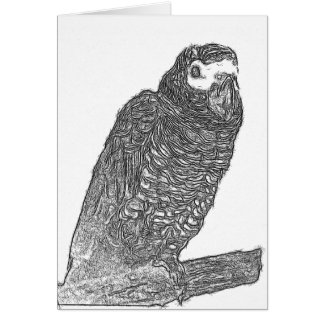 Parrot Sketch Card