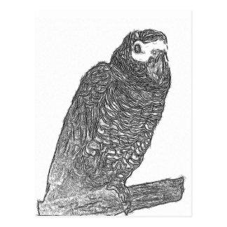 Parrot Sketch Postcard
