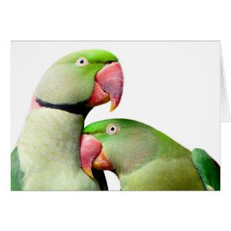 parrot tarjeta de felicitación