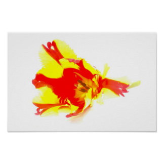 Parrot Tulip abstract Photo Poster