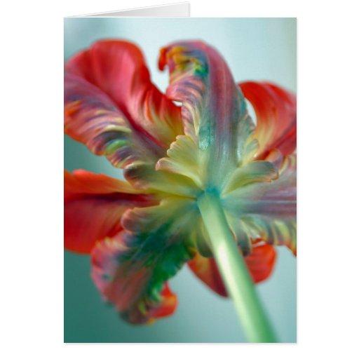 parrot tulip cards