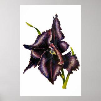 Parrot Tulip Fine Art Print