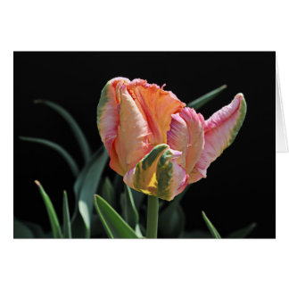 Parrot Tulip No. 2 Greeting Card