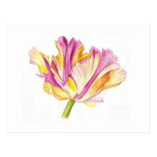 Parrot tulip postcard