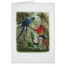 parrot, vintage, print collection, 1848