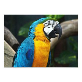PARROT WILD BIRDS TROPIAL WILDLIFE COLORFUL DIGITA PERSONALIZED INVITATION