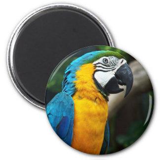 PARROT WILD BIRDS TROPIAL WILDLIFE COLORFUL DIGITA MAGNET