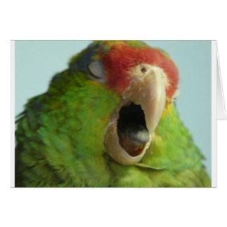 parrot yawning card