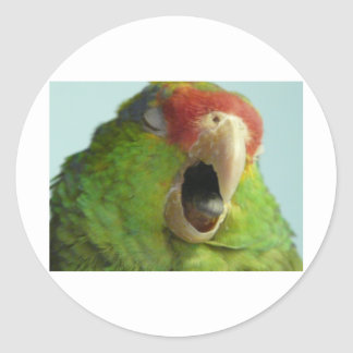 parrot yawning classic round sticker