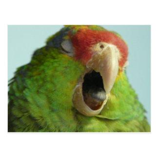 parrot yawning postcard
