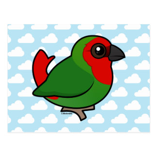 Parrotfinch Rojo-dirigido Tarjeta Postal
