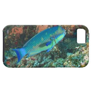 Parrotfish near Taveuni Island, Fiji, South iPhone 5 Case