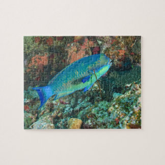 Parrotfish near Taveuni Island, Fiji, South Jigsaw Puzzle