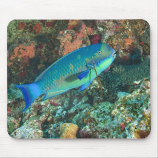 Parrotfish near Taveuni Island, Fiji, South Mouse Pad