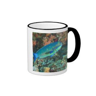 Parrotfish near Taveuni Island, Fiji, South Coffee Mug