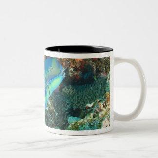 Parrotfish near Taveuni Island, Fiji, South Coffee Mugs