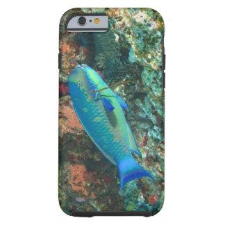 Parrotfish near Taveuni Island, Fiji, South Tough iPhone 6 Case