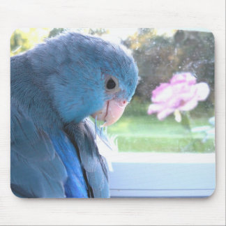Parrotlet Blue Bird communing with nature mousepad
