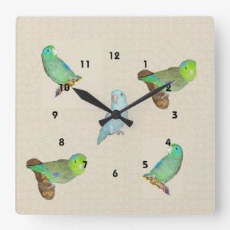 Parrotlet Flock Square Wall Clock