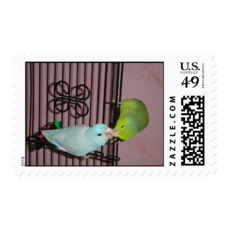 Parrotlet kiss postage stamp