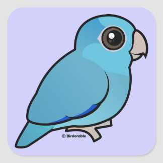 Parrotlet pacífico azul pegatinas cuadradas personalizadas