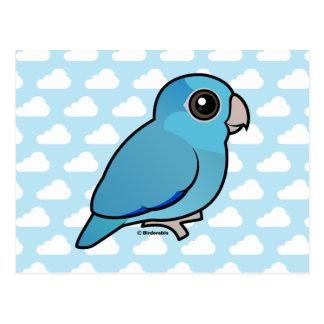 Parrotlet pacífico azul postales