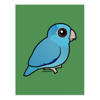 Parrotlet pacífico azul tarjetas postales