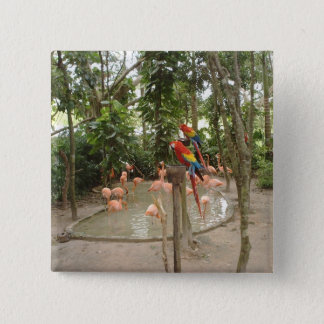 Parrots and flamingos hang out at water spot pinback button