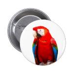 parrots boton