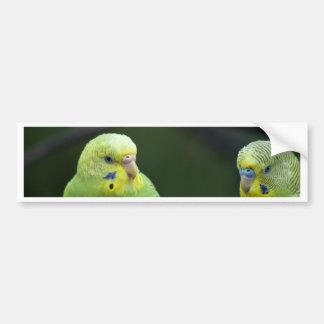 Parrots Bumper Sticker