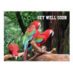 parrots get well soon card postcard