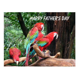Parrots Happy Father's Day Postcard