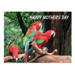 Parrots Happy Mather's Day Postcard
