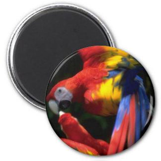 Parrots In Love Magnet