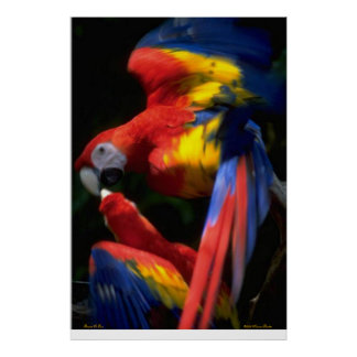 Parrots In Love Poster