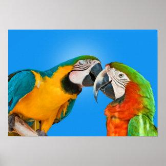 Parrots in Love Print
