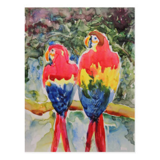 Parrots in the Rain Forest Postcard